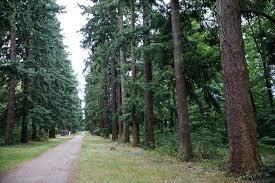 Allée des Sapins et Bois de Concyr